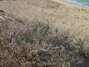 ValterCasali-Maocco-2009-SpiaggiaOceanoAtlantico