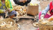 Latitude180-laos-phongsali-trek-villaggio-etnia-laosan-raccolto-mais