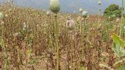 Latitude180-laos-phongsali-trek-villaggio-etnia-laosan-campo-oppio