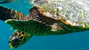 Latitude180_Seychelles_SeaTurtle