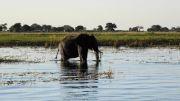 Latitude180-Botswana-2016-ChobeRiver5