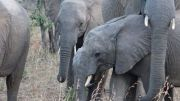 Latitude180_SudAfrica_Kruger-Timbavati13