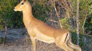 Latitude180_SudAfrica_Kruger-Timbavati17