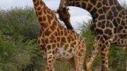 Latitude180_SudAfrica_Kruger-Timbavati2