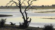 Latitude180_Boswana_2016_RiverChobeSafariDrive28