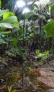 Latitude180_Seychelles_Praslin_ValledeMai1