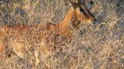 Latitude180_Botswana2