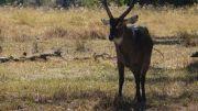 Latitude180_Botswana_OkawangoDelta4