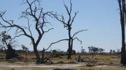 Latitude180_Botswana_OkawangoDelta7