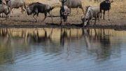 Latitude180_Botswana_Moremi2