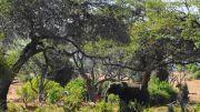 Latitude180-Botswana-2016-RiverFrontChobe