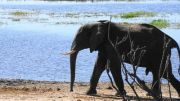 Latitude180-Botswana-2016-RiverFrontChobe3