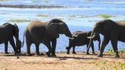 Latitude180-Botswana-2016-RiverFrontChobe4