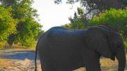 Latitude180-Botswana-2016-ChobeRiverFront11