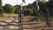 Latitude180-Botswana-2016-ChobeRiverFront12
