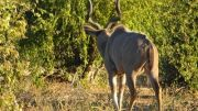 Latitude180-Botswana-2016-ChobeRiverFront18