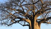 Latitude180-Botswana-2016-ChobeRiverFront22