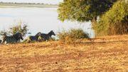 Latitude180-Botswana-2016-ChobeRiverFront7