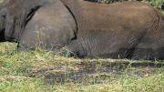 Latitude180-Botswana-2016-ChobeRiver1