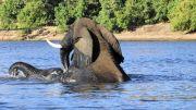 Latitude180-Botswana-2016-ChobeRiver12