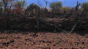 Latitude180_2016_Nambia_HimbaVillag_CattleEnclosure