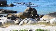 Latitude180-southafrica2016-boulderbeach-coloniapinguini2