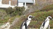 Latitude180-southafrica2016-boulderbeach-coloniapinguini4