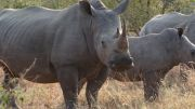Latitude180_SudAfrica_Kruger-Timbavati14