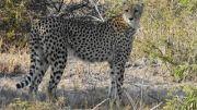 Latitude180_SudAfrica_Kruger-Timbavati16