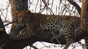 Latitude180_SudAfrica_Kruger-Timbavati24