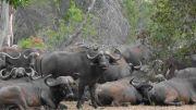 Latitude180_SudAfrica_Kruger-Timbavati4