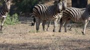 Latitude180_SudAfrica_Kruger-Timbavati7